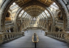 Job: Social Media Manager, Natural History Museum, London