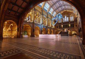 Job: Digital Content Manager, Natural History Museum, London