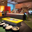 Dinosaurs and Design Thinking: Innovation and Collaboration