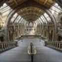 Job: Social Media Manager, Natural History Museum, London